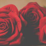 ורדים של אהבה